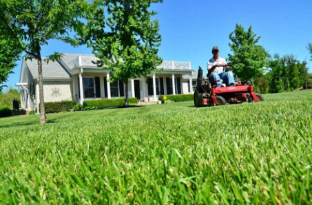 Professional Lawn Services